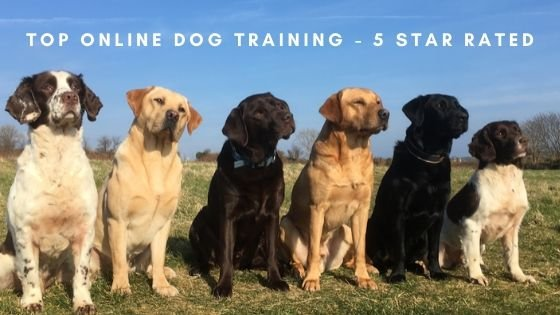Best Online Dog Training